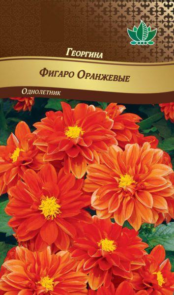 georgina figaro orangevue RG-180-02-ru.indd