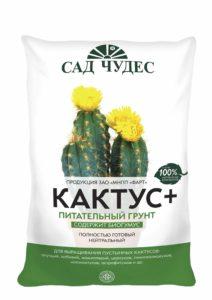 kaktusplus_1