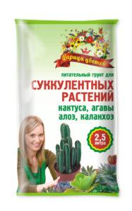 Царица-цветов_суккуленты_25-638x1024